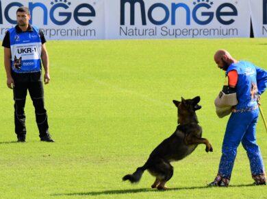 Спортивная амуниция для дрессировки собак