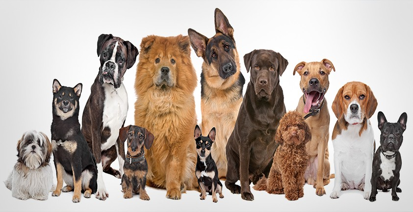 консультация кинолога при выборе породы собаки харьков