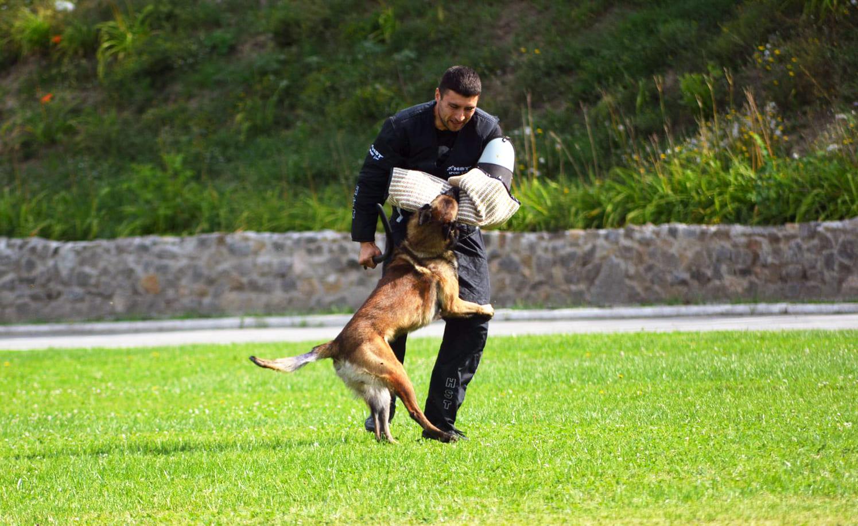 подготовка собак к сдаче IGP нормативов в харькове